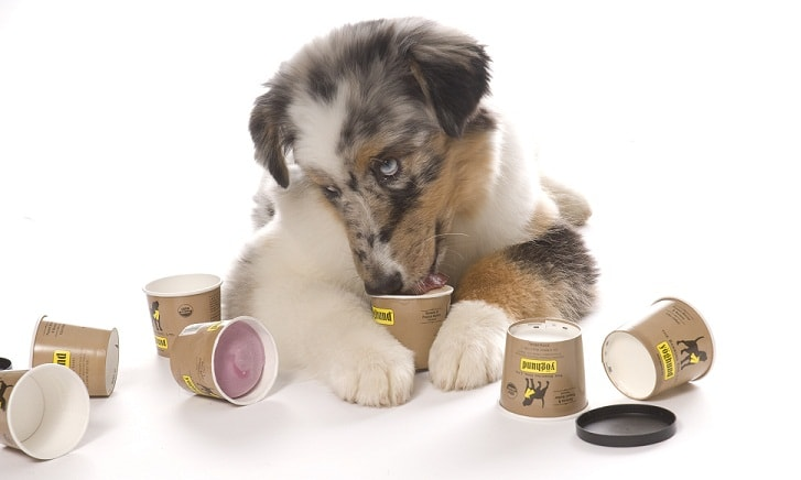 Use cold treats to help your dog's teething