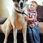 Three-Legged Dog Helps Boy with Genetic Condition