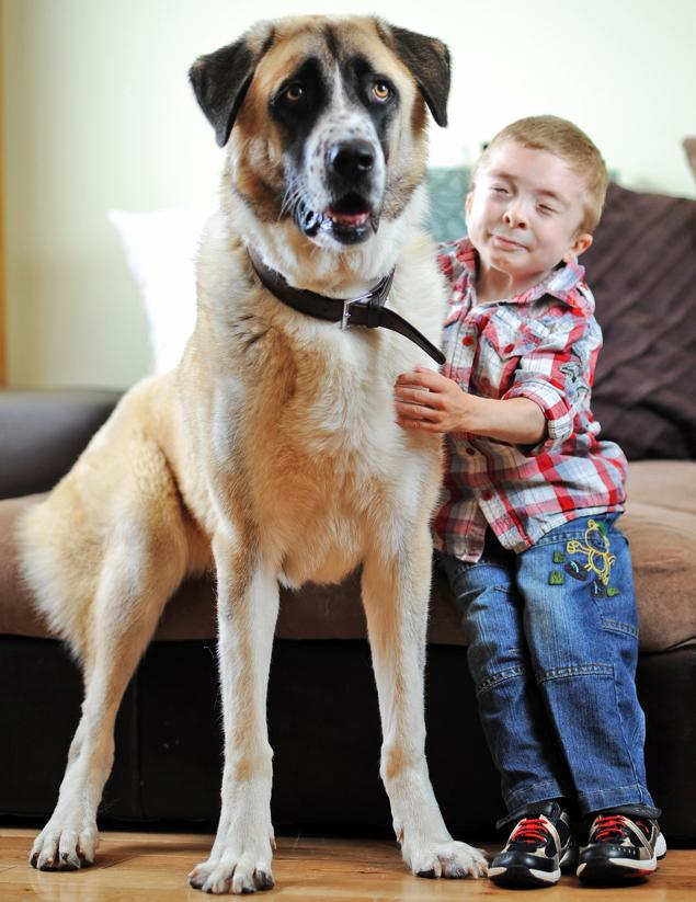 Three-Legged Dog Helps Boy with Genetic Condition