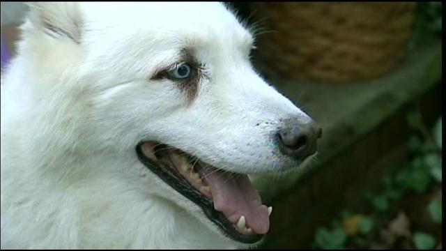 SURPRISE VISIT: DOG TRACKS AILING OWNER TO HOSPITAL – TWICE