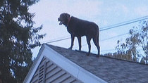 Police rescue dog stuck on the roof of his house