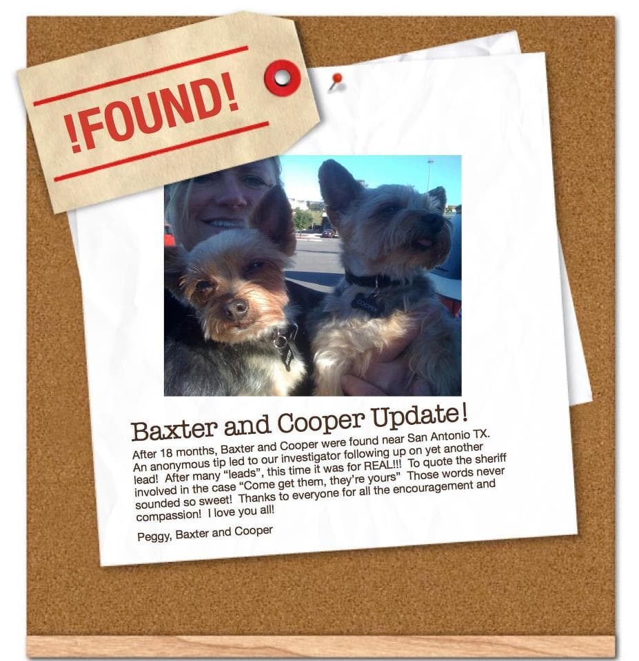 Found! Stolen Yorkies Baxter and Cooper Return Home After 18 Months