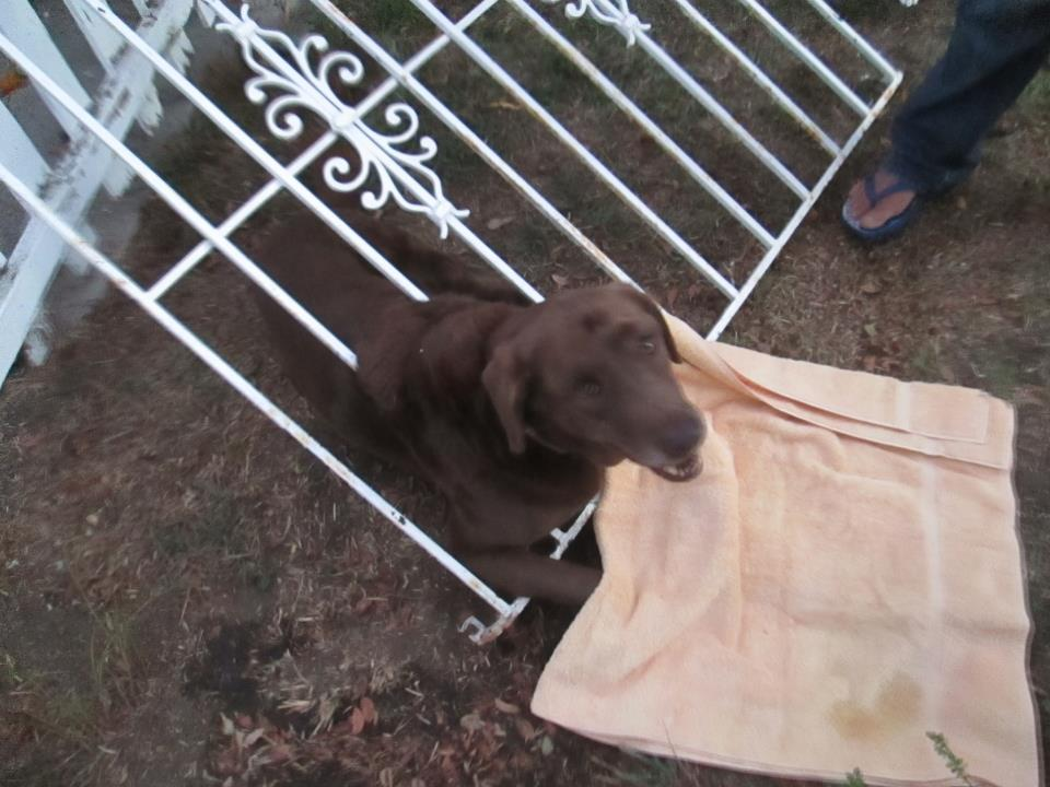 Firefighters Free Dog Stuck in a Wrought Iron Gate