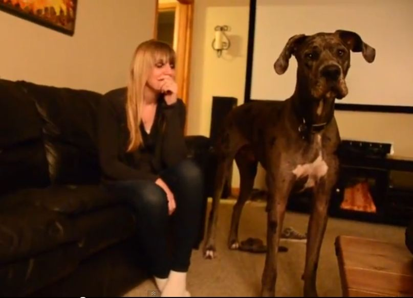 Great Dane Howling and Aroooing at Another Dog Howling on YouTube