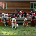 dog scouts