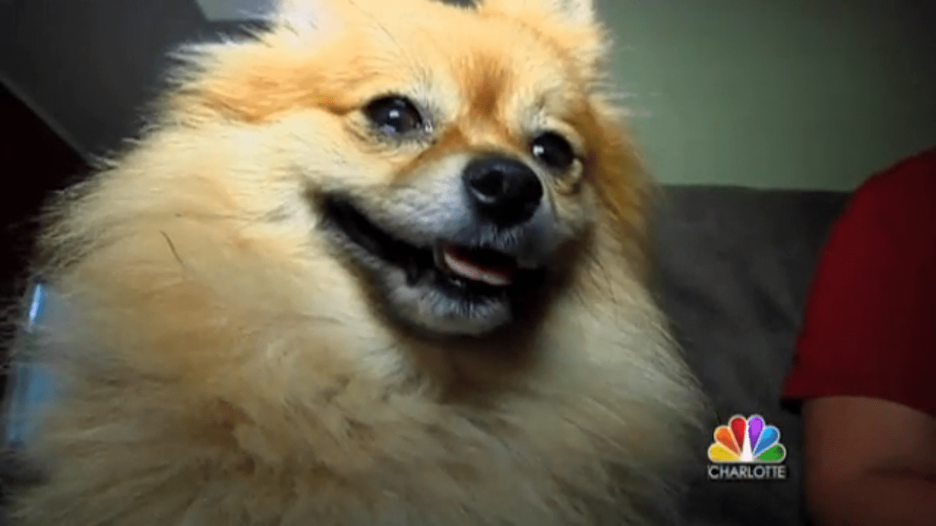 Dog almost dies from dog shampoo
