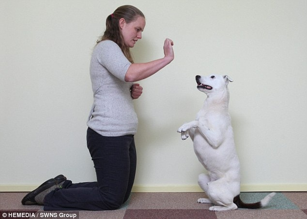 Deaf dog finally given a chance to be good