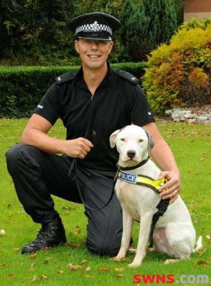 Shelter dog becomes a police dog