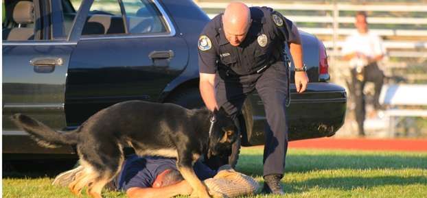 Keeping police dogs safe with ballistic vests in Mentor, Ohio