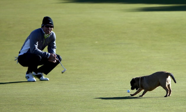 Dog steals golfer's ball