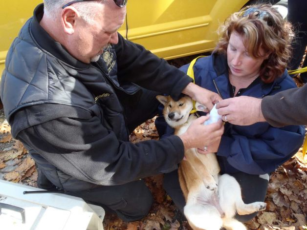 Dog survives fall off of 75 foot cliff