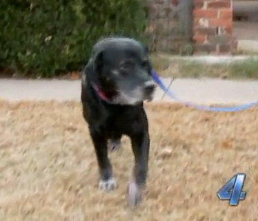 Dog and Skunk Help Save Elderly Woman from House Fire