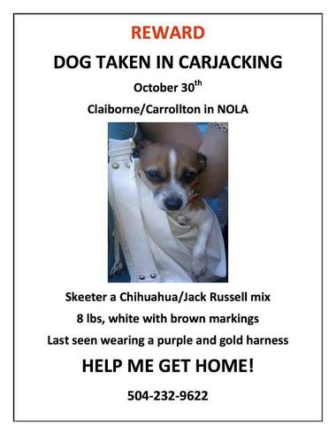 $1000 Reward Offered for Dog in Carjacking