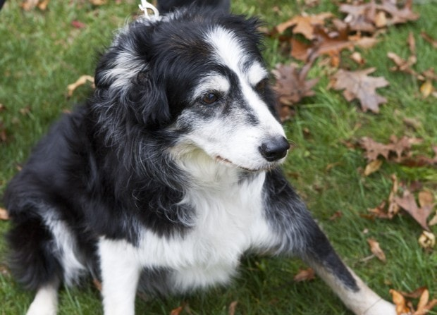 Blind and Deaf Dog Comes Home Healthier after Two Weeks Missing
