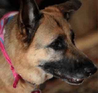 Tabitha, hero guide dog, and best friend