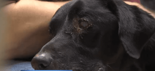 Starving dog is saved by a good Samaritan, just in time