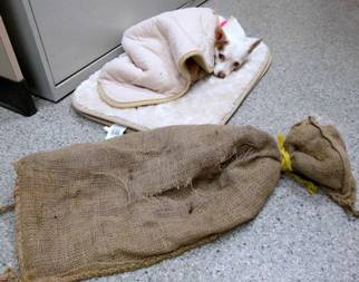 Dog found abandoned in a burlap sack on the side of the road