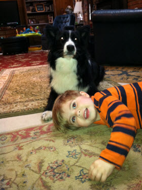 Loyal dog stays by lost 2-year-old boy's side