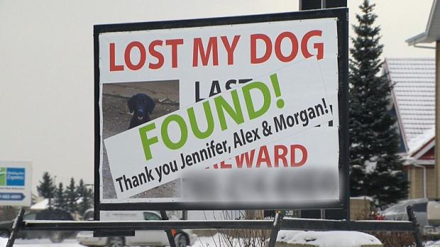 Billboard helps bring home missing dog
