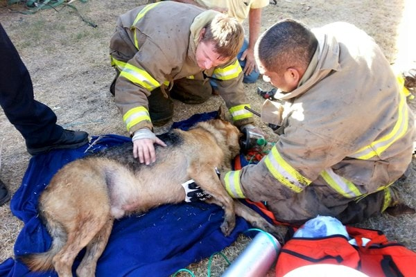 Firefighters revive dog trapped in a fire
