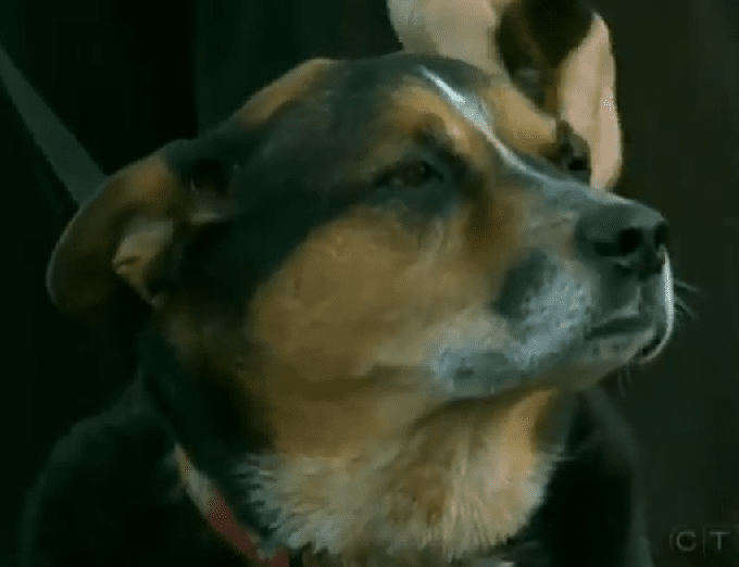 Dog saves the life of 87-year-old man trapped in the woods
