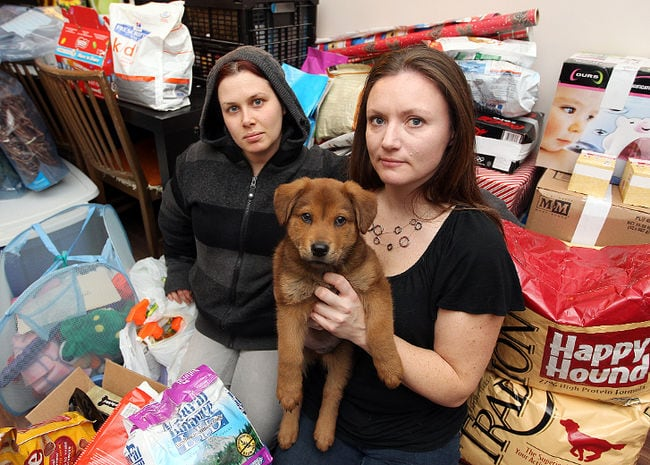 Food and supplies for homeless dogs in need stolen from rescue group