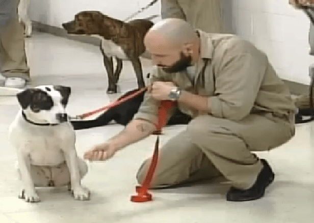 Inmates Help Save Dogs From Being Put Down
