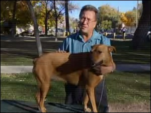 Dying war vet needs a new home for his dog