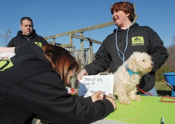 241 dogs rescued from an alleged puppy mill in Ohio