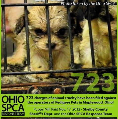 Owners of Ohio puppy mill plead not guilty to 723 charges of animal cruelty