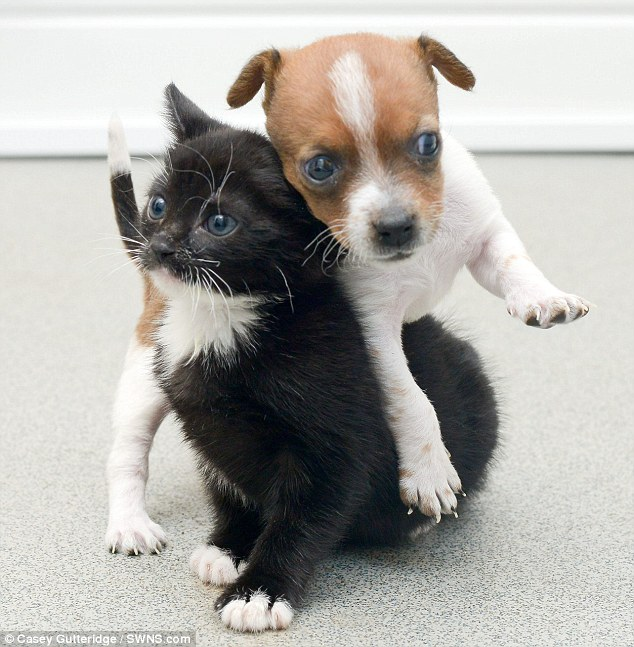 Adorable Bonded Puppy and Kitten Find Home Together