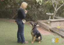 Rescue dogs saving lives by helping detect cancer