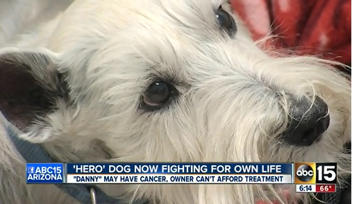Lifesaving Service Dog Needs a Lifesaver