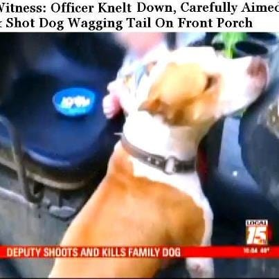 ASPCA:  Most Instances of Police Shooting Dogs are Avoidable