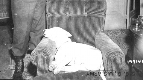 How Dogs Helped The Allies Win Wwii Life With Dogs