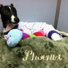 PHOENIX UPDATE:  One of Teens Who Burned Jack Russell Terrier Pleads Guilty