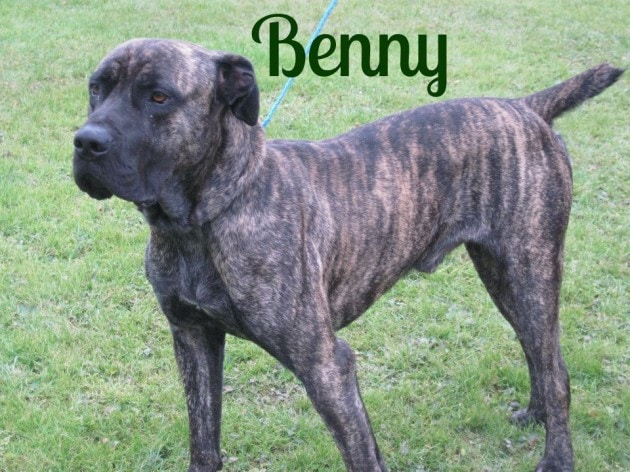 Benny needs a new forever home