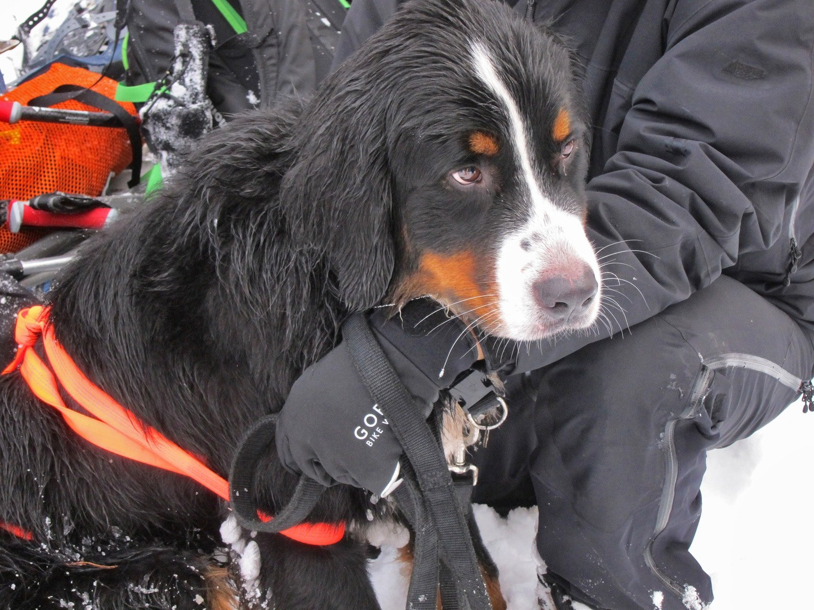 Dog rescued after spending two weeks lost on a mountain