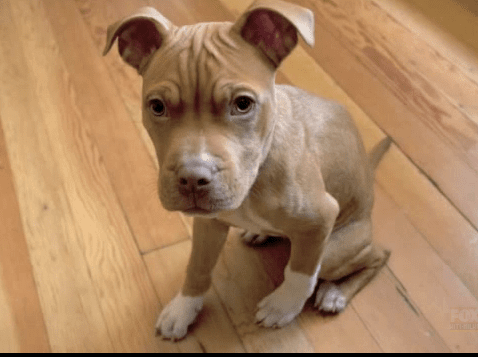 Community rallies to help find puppy stolen on Christmas eve