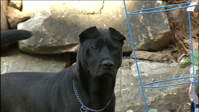 Newly adopted dog saves family from fire