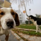 In Bosnia a group of animal activists work through the night to save lives