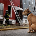 Dog runs to owner's work to alert him of house fire