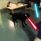 Jedi Dog