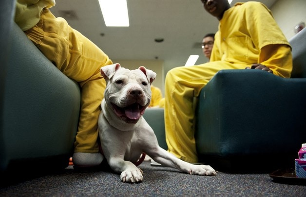 Humane program working with juvenile detention center to stop animal cruelty