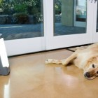 Light boxes helping dogs with Seasonal Affective Disorder