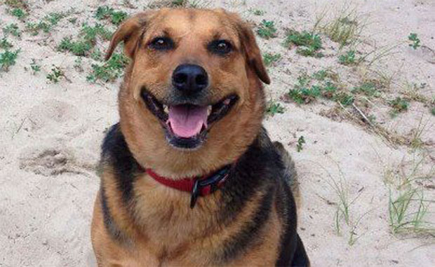 Man wants traps banned after watching his beloved dog die