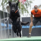 Two-time world champion was a dog no one wanted