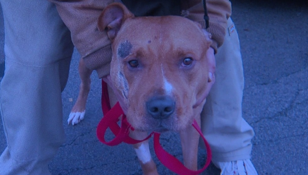 A bystander becomes a guardian angel when a dog is struck by a car