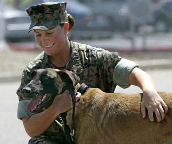 Must see Soldier Army Adorable Dog - sgtrex-590x494  2018_514433  .jpg