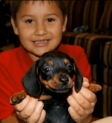 Boy reunited with his lost puppy